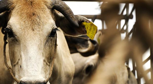 Producenci mięsa: Ograniczenie uboju rytualnego to likwidacja miejsc pracy