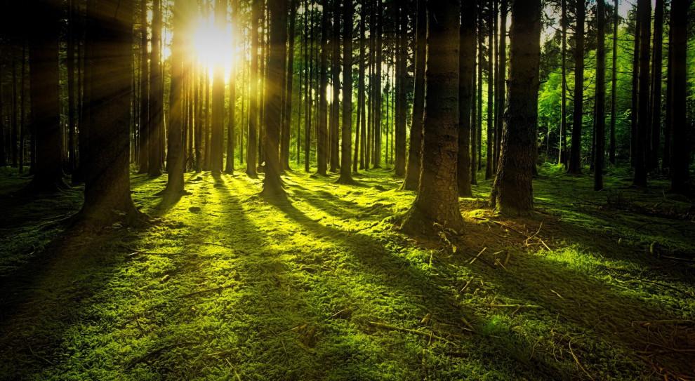 EFL świętuje 30-lecie istnienia. Z tej okazji posadzi las