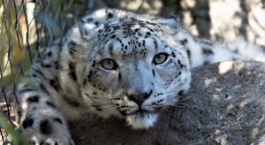 Miłość do dzikich zwierząt, odporność na stres i koncentracja - wrocławskie zoo rekrutuje