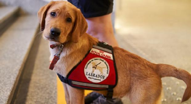 Dofinansowanie na szkolenie dla psów przewodników