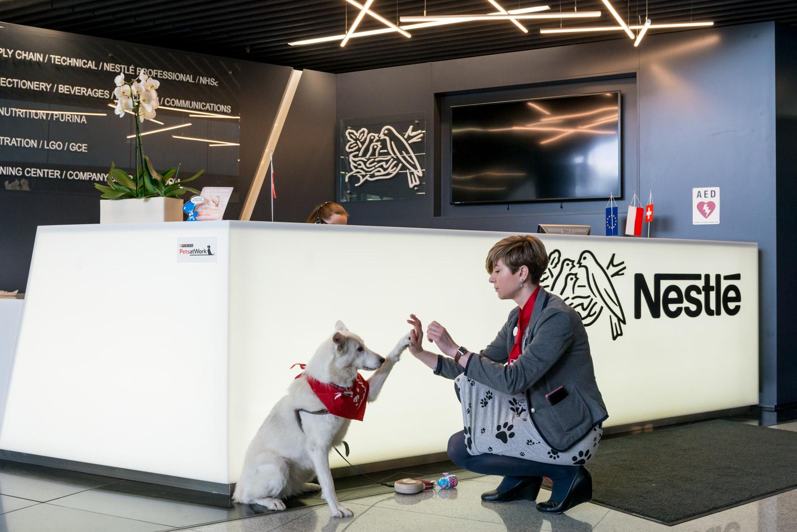 Psy pracowników Nestle Purina są zapraszane do biura. (Fot. Nestle Purina)