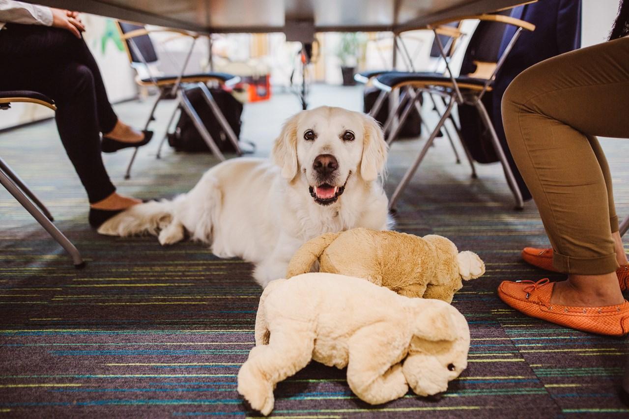 """Pomysł """"Biura Przyjaznego Zwierzętom (Fot. Royal Canin)"""