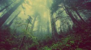 Drzewo przygniotło drwala. Śmierć podczas wycinki