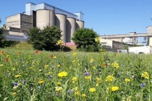 Firma bierze odpowiedzialność za środowisko. Zadba o pszczoły