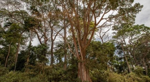 W ciągu 20 lat zniknęło 66 proc. powierzchni lasów. Grupa Velux i WWF chcą to naprawić