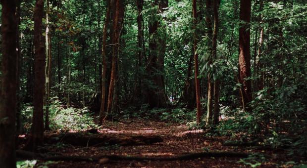 Pracę w lasach rozpoczynają więźniowie